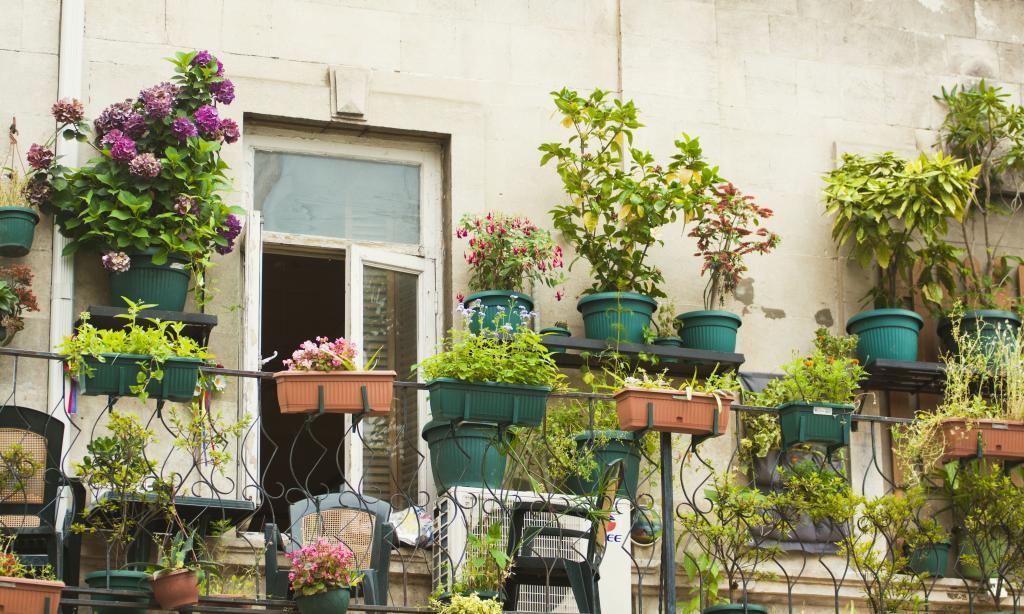 Így kezdd a kertészkedést, ha városlakó vagy!
