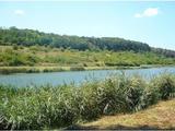 Pogányban halas vagy horgásztó, szántóval erdővel eladó befektetésre is.