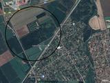 erdőterület | Szegeden kitűnő helyen erdőterület