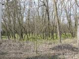 Erdő | Nyár és akác vegyes erdő