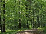 Eladó erdő Balatonendréden