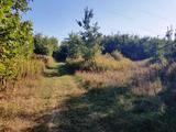 14 hektáros terület eladó Ajkán