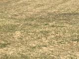 2,5 hektár szántó