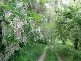 Erdő gazdag vadállománnyal