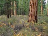 Belterületi erdő