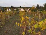 Kis ház rengeteg szőlővel