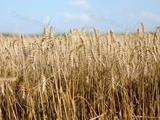 eladásra kínálok Békésmegyében 1.32 HA földterületet Sarkadkeresztúron