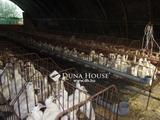 Eladó tanya, Kiskunfélegyháza, Modern tanya állattartásra alkalmas teleppel