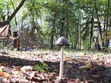 Ásotthalom (IV.körzet), műúttól, bicikliúthoz közel a vadonban.