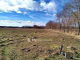 Balástya, Őszeszék, öntözéses gazdálkodásra alkalmas szántó, erdővel