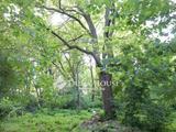 Hangulatos, Balaton közeli erdő saját forrással
