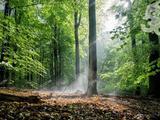 Építkezzen erdős környezetben!