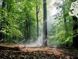 Kiskunhalas-erdőterület tulajdoni hányad-Eladó