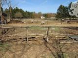 Menekülne a városból vagy gazdálkodna? A legjobb választás egy erre alkalmas tanya!