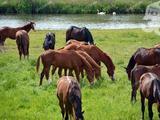 Kecskemét közelében lovas tanya és panzió,16 hektár földdel ELADÓ