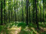 Bikács területén erdő eladó! D56