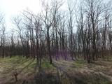 Pusztamérgesen külterületén 61200 nm-es erdő eladó!