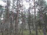 Debrecen Bánkon, erdő eladó!