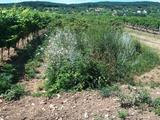 Tagyoni földterület a Balatonhoz közel eladó