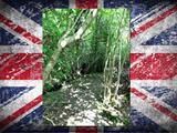 Süssön szalonnát Londontól 30 km-re a saját telkén
