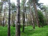 Természetszerű erdő 4,2Ha eladó, Nagybarca