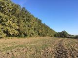Szarvason Nyúlzugban eladásra kínálunk egy nagy alapterületű mezőgazdasági területet.