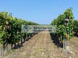 Eladó Mezőgazdasági, Olaszliszka 5.300.000 Ft