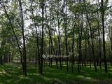 Eladó szántóföld, legelő, Soltvadkert, külterület